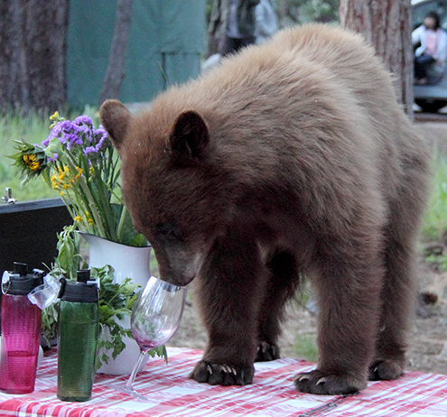 Bear and wine