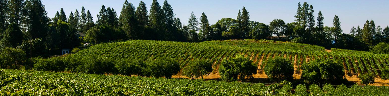 Wine Futures: Beatty Ranch