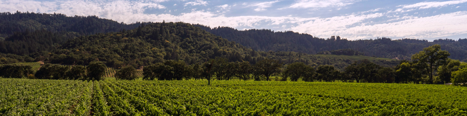 Buy Wine Online: Branding Iron Vineyard