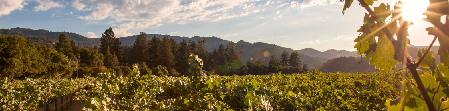 Wine Futures Exchange: Hayne Vineyard