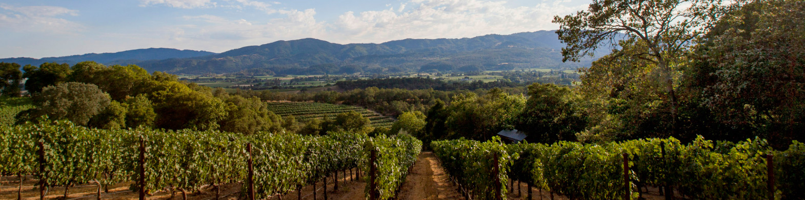 Nickel & Nickel: Quarry Vineyard