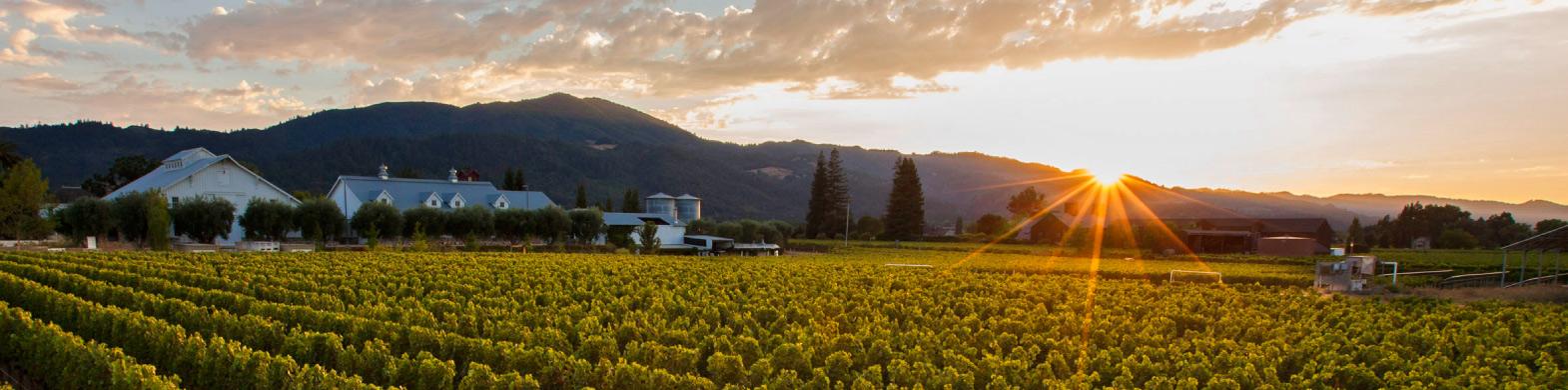 Wine Websites: John C. Sullenger Vineyard