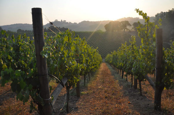 Napa Valley Chardonnay: Get to Know Truchard