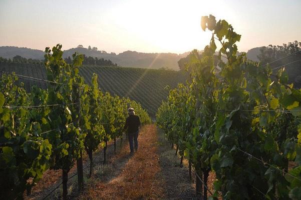 Single-Vineyard Chardonnay, Truchard
