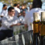 Napa Valley Chardonnay, Truchard Vineyard