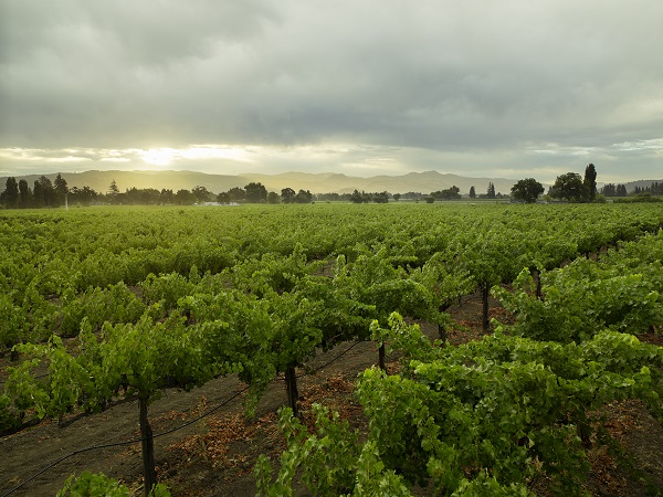 Bella Union: The Next Step in our Napa Valley Vineyard Journey